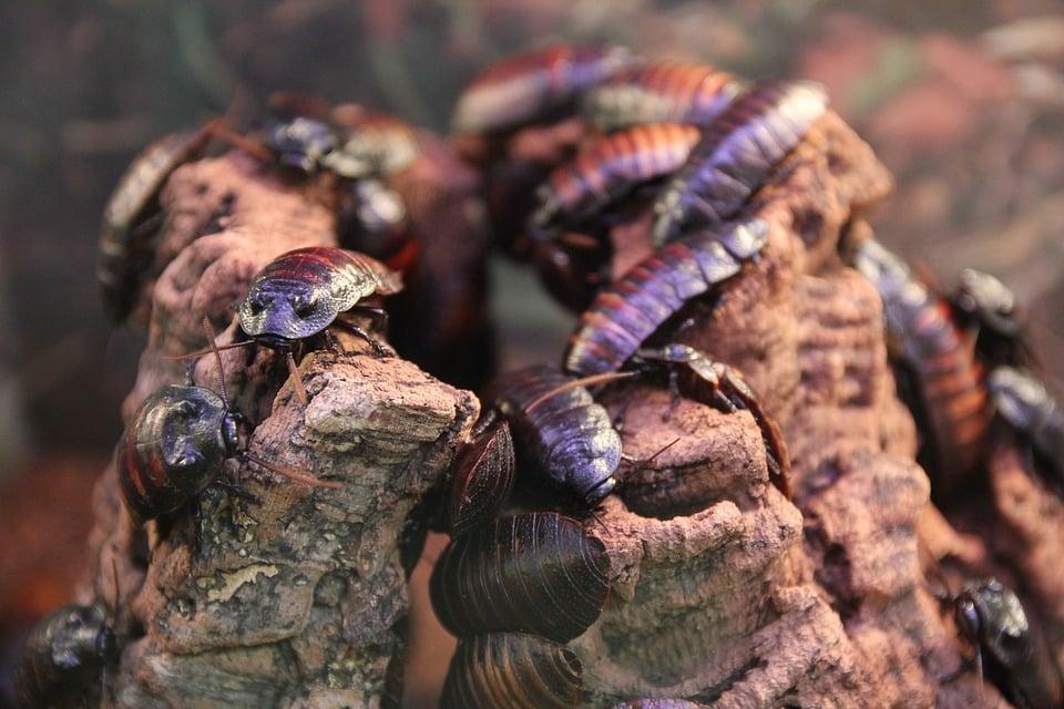 élimination de blattes cafard dans la marne, élimination de blattes cafard dans les ardennes, élimination de blattes cafard dans la haute marne, élimination de blattes cafard dans la meuse, élimination de blattes cafard dans l'aisne