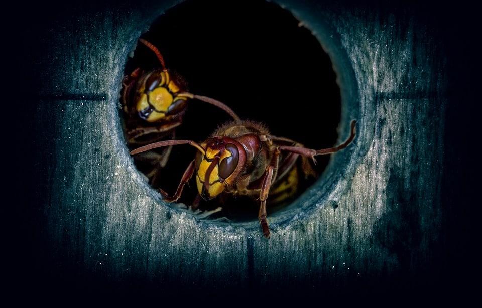 destruction de nid de guêpes, frelon asiatique pas cher Reims | destruction de nid de guêpes, frelon asiatique pas cher Troyes | destruction de nid de guêpes, frelon asiatique pas cher marne | destruction de nid de guêpes, frelon asiatique pas cher Épernay | destruction de nid de guêpes, frelon asiatique pas cher Marne | destruction de nid de guêpes, frelon asiatique pas cher Charleville Mézières | destruction de nid de guêpes, frelon asiatique pas cher Sedan | destruction de nid de guêpes, frelon asiatique pas cher Ardennes | destruction de nid de guêpes, frelon asiatique pas cher Meuse | destruction de nid de guêpes, frelon asiatique pas cher Verdun | destruction de nid de guêpes, frelon asiatique pas cher Aisne | destruction de nid de guêpes, frelon asiatique pas cher Laon | destruction de nid de guêpes, frelon asiatique pas cher Saint Quentin