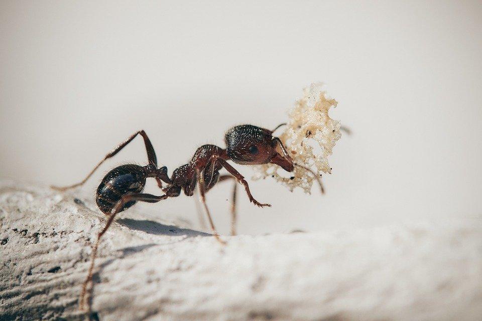 Contrôle des fourmis à Troyes dans l'Aube