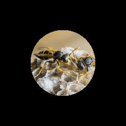 destruction de nid de guêpe pas cher reims dans la marne, destruction de nid de guêpe pas cher ardennes à charleville, destruction de nid de guêpe pas cher dans la meuse a verdun, destruction de nid de guêpe pas cher dans l'aisne à laon et saint quentin